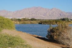 Meer in het park, aalscholvers die dichtbij het water rusten Stock Foto