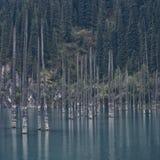 Meer Kaindy Dode bomen over het meer Tegen de achtergrond van sparren stock foto's