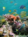 Meer-Lebensdauer Farben Stockfotos