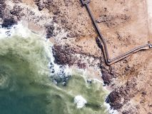 Meer Lion Colony in Namibia im Januar 2018 genommen stockbilder