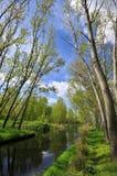 Meer met bos Stock Afbeelding
