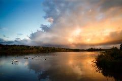 Meer met Dramatisch Wolken, Vogels en Autumn Trees Royalty-vrije Stock Foto