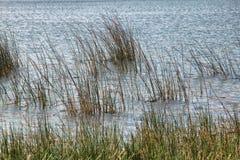 Meer met Gras en Gegolfte Waterachtergrond royalty-vrije stock foto
