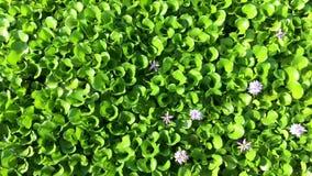 Meer met groene vegetatie stock videobeelden