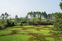 Meer met overwoekerd aquatisch gras en onkruid in de zonnige zomer morn royalty-vrije stock afbeelding