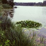 Meer met waterlelies Stock Foto's