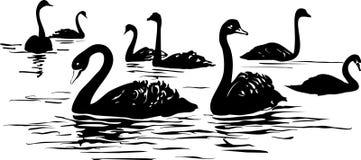 meer met zwarte zwanen vector illustratie