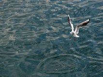 Meer mit Seemöwe Lizenzfreies Stockbild