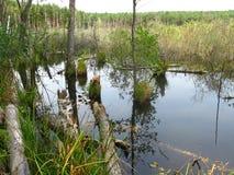 Meer, moeras, bomen en mos. Royalty-vrije Stock Afbeeldingen