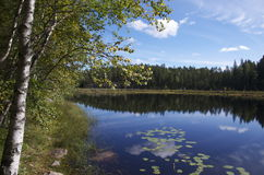 Meer in Nuuksio NP, Finland Stock Foto