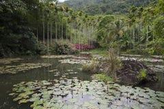 Meer in regenwoud Stock Fotografie