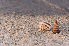 Meer schält Sandstrand Stockfotografie