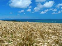 Meer, Sonne und Weizen Stockbilder