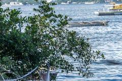 Meer sonniger Tag Fischer Fischerboote der Boote und Gebirgsblaues Seemeer und -bäume stockfotografie
