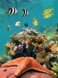 Meer-Stern und Fische Stockfotos