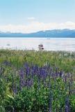 Meer tahoe Nevada met bergen en bloemen Royalty-vrije Stock Foto's