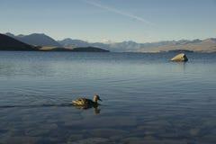 Meer Tekapo, Nieuw Zeeland Royalty-vrije Stock Afbeeldingen