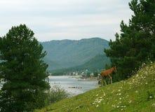 Meer Teletskoye. De Bergen van Altai Royalty-vrije Stock Afbeeldingen
