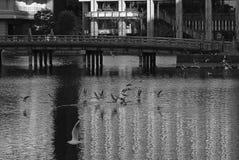 Meer in Tokyo Japan met faunavogels royalty-vrije stock afbeelding