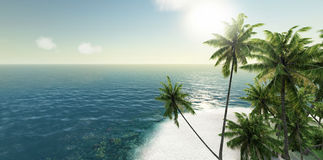 Meer, Tropeninsel, Palme, Wiedergabe der Sonne 3d Stockbilder