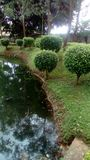 Meer, tuin, bomen en gras onder de zon Royalty-vrije Stock Afbeeldingen