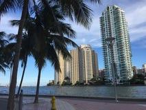 Meer und Palmen lizenzfreie stockfotos