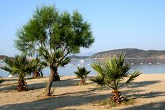 Meer und Palmen Lizenzfreie Stockbilder