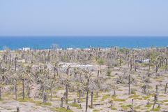 Meer und Palmen auf Wüste Stockbilder