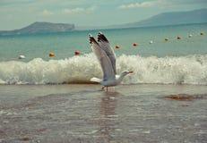 Meer und Seemöwe lizenzfreie stockfotos