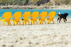 Meer und Stühle Stockfoto