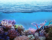 Meer Unterwasser lizenzfreie stockfotos