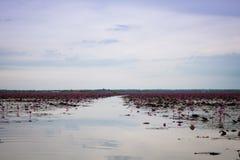 Meer van rode lotusbloem in Udonthani unseen Thailand (in Thailand) royalty-vrije stock afbeelding