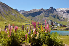 Meer van Tignes en bloemen in Frankrijk Stock Afbeelding