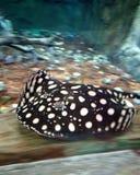 Meer vissen in groot aquarium royalty-vrije stock afbeeldingen