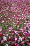 Meer von Blumen Lizenzfreie Stockbilder