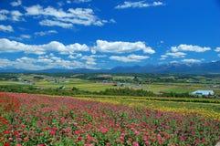 Meer von Blumen Stockfotos
