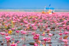 Meer von rosa Lotos, Nonghan, Udonthani, Thailand lizenzfreies stockfoto