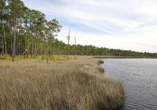 Meer von sah Gras am Tarkiln-Bayou-Konserven-Nationalpark stockbilder