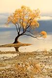 Meer Wanaka, Zuideneiland Nieuw Zeeland Stock Foto