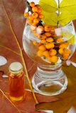 Meer-Wegdorn Beeren und Herbstblätter stockbilder