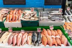Meerbarbe, Rotbarsch und andere Fische für Verkauf stockfotografie