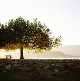 Meerblick die Schweiz Bielersee Bern Tree Bench Horizon lizenzfreie stockfotografie