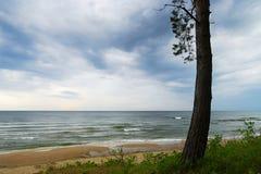 Meerblick mit der alleinen Kiefer, die auf Düne wächst Ostseelandschaft bei wolkigem Wetter Stockfotografie