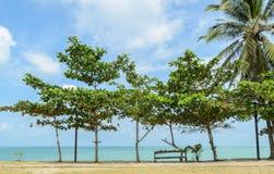 Meerblick mit tropischem Mandelbaum Stockfotos