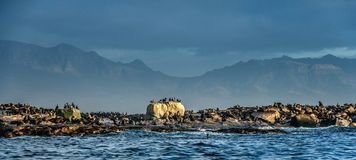 Meerblick morgens Die Kolonie von Dichtungen auf der Insel stockfotos