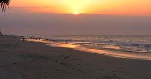 Meerblick während des Sonnenuntergangs mit Palme auf Vordergrund stock video footage