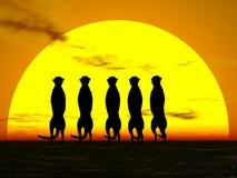 meercat ήλιος Στοκ εικόνα με δικαίωμα ελεύθερης χρήσης