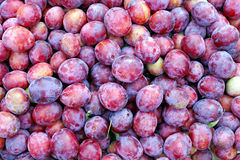 Meerderheid van rood pruimenfruit stock foto