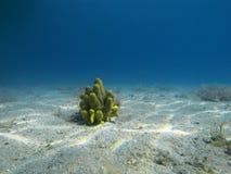 Meeresboden Stockbild
