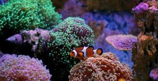 Meeresfisch Lizenzfreie Stockfotos